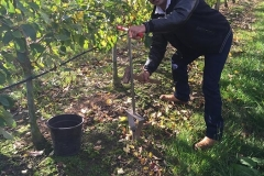 Planc applied Apple orchard tested low pressure of penetrometer , that means soil profile improved and more earthworms